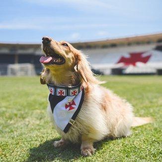 Bandana Pet Vasco Cruz de Malta